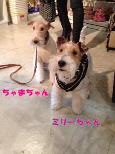 ちゃまちゃん&ミリーちゃん
